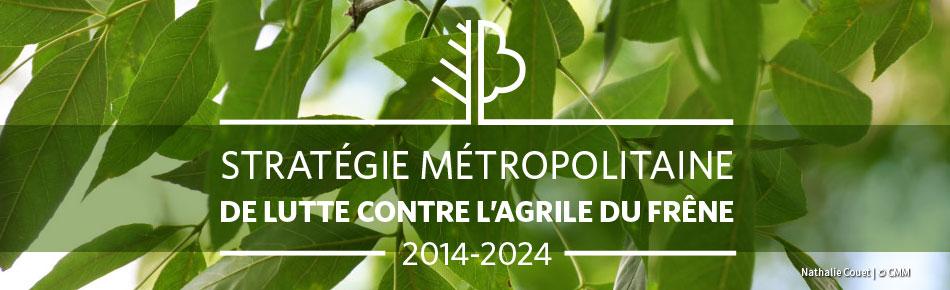 Bannière - Stratégie métropolitaine de lutte contre l'agrile du frêne - bilan