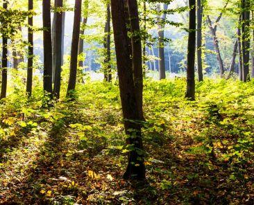 Forêt - indice canopée