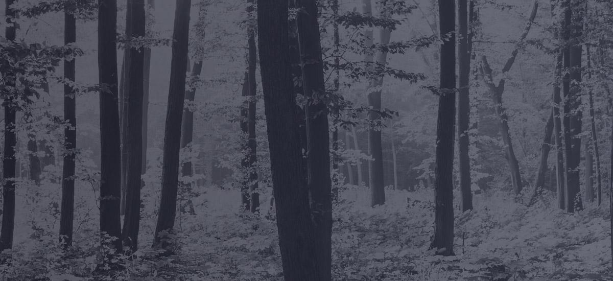 Environnement - Forêt