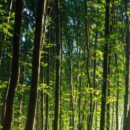 Conservation :  Laval acquiert un terrain boisé à Sainte-Rose
