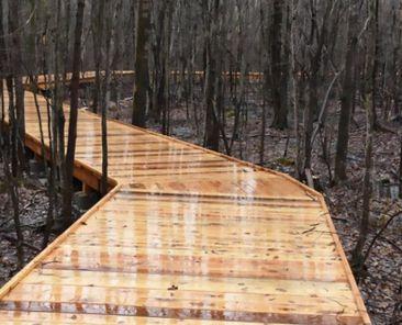 Sentier pédestre au parc de la Futaie | Communauté métropolitaine de Montréal (CMM)