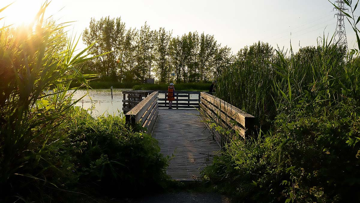 Boucherville – Frayère de la rivière aux Pins