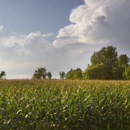 La CMM défavorable au dézonage agricole de 139 hectares pour le projet Forestia Le Quartier à Boisbriand