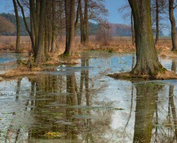 Montée des eaux dans un boisé