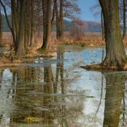 COVID-19 ǀ Accélérer la gestion des risques d'inondation pour renforcer la résilience du Grand Montréal