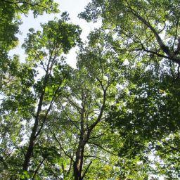 Un gain de 15 hectares pour la zone de conservation  du Parc régional des Grèves à Contrecœur