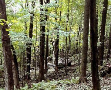 Mont-Saint-Hilaire - milieux naturels