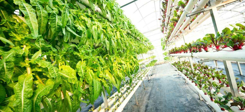 Agriculture - légumes en serre