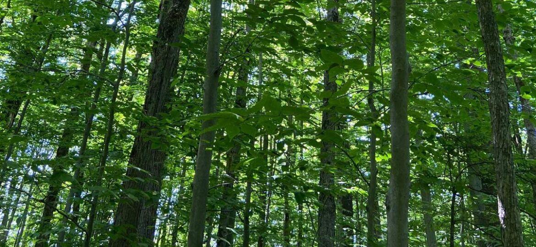 Forêt du Grand Coteau
