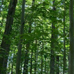 La CMM travaille sans relâche à la protection des milieux naturels du Grand Montréal